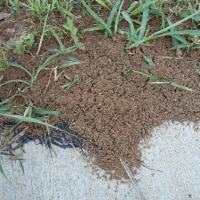 fire ant treatments