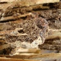 termitetreatmentsspraydryrot