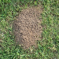 fire ant mound treatments