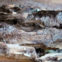 termitetreatmentsspray